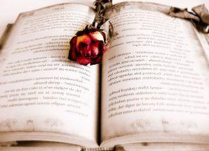 خرید رمان انگلیسی اورجینال